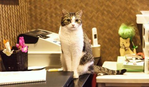 レジカウンターで店番猫
